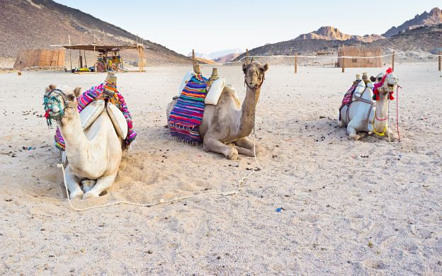 Bedouin Village Tour - from Hurghada