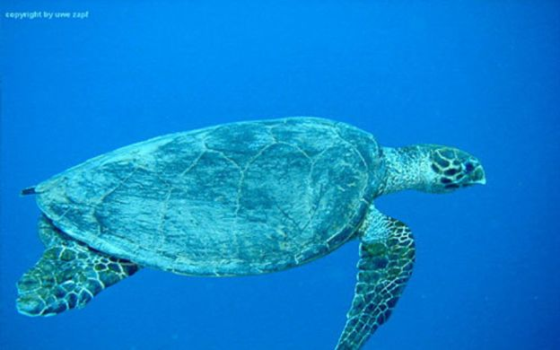 Red Sea Diving Trip - Tour from Hurghada