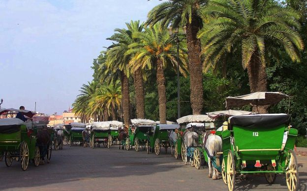 Marrakech Gardens Tour by Horse-Drawn Carriage
