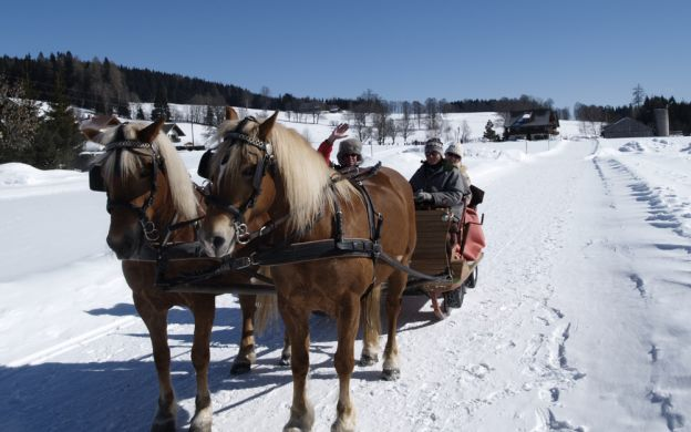 Private Half day Horse Drawn Sleigh Ride from Salzburg