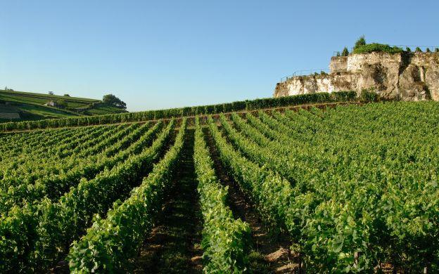 Sample Pleasures - Wine Tasting at the Saint Emilion Vineyards