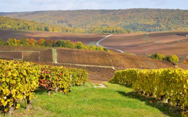 Route du Champagne: Wine Tastings, Cellar Visit, Private Tour – from Paris