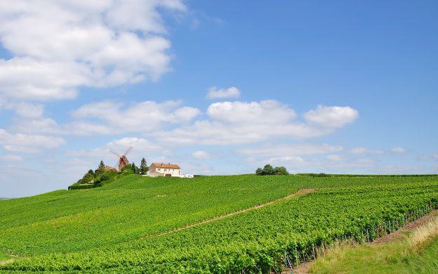 Champagne Region & Reims: Mercier and Mumm Cellars Visit, Tastings – from Paris