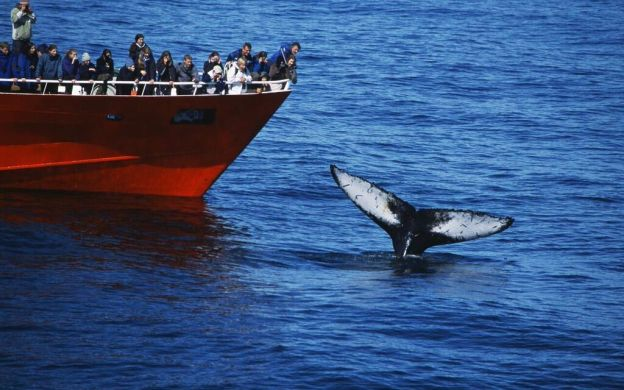 Quad Biking and Whale Watching in Reykjavik