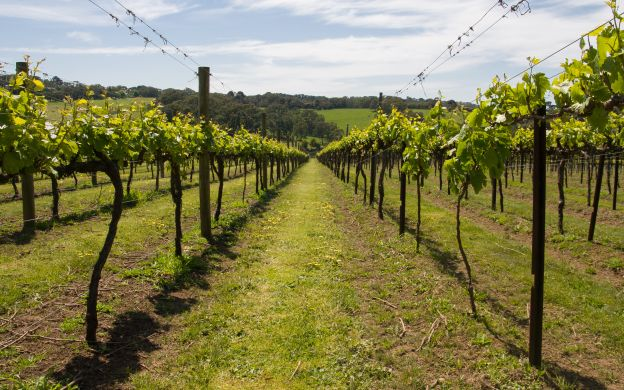 Roman Countryside Vineyards and Wine Tasting Tour - From Rome