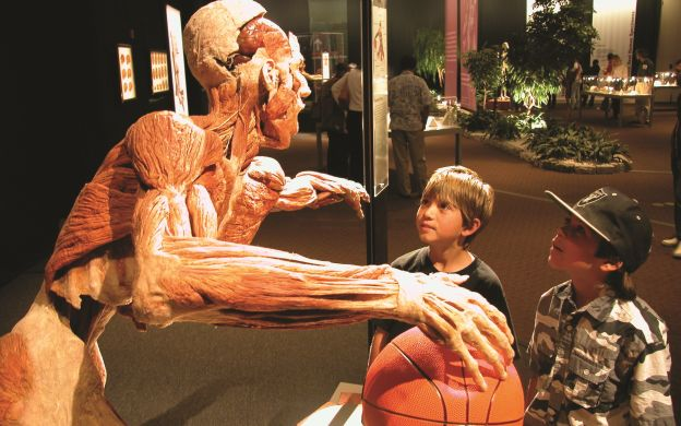 Body Worlds: The Happiness Project Amsterdam Ticket