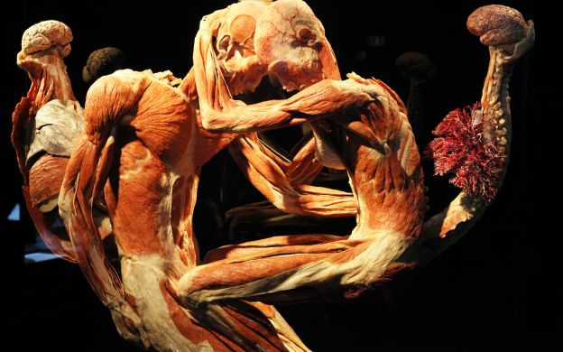 Body Worlds - The Happiness Project Exhibit