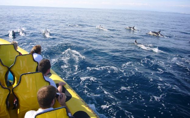 Caves and Dolphin Spotting cruise along the Algarve Coast