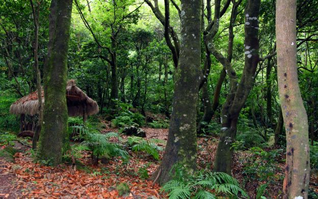Madeira's Levadas - Hiking and Sightseeing Tour