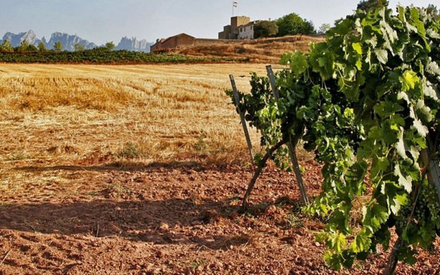 Montserrat Tapas and Wine Tour: Winery Visit, Guide, Tastings, Transfers from Barcelona