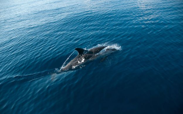 Gibraltar Dolphin Watching Tour - From Costa del Sol