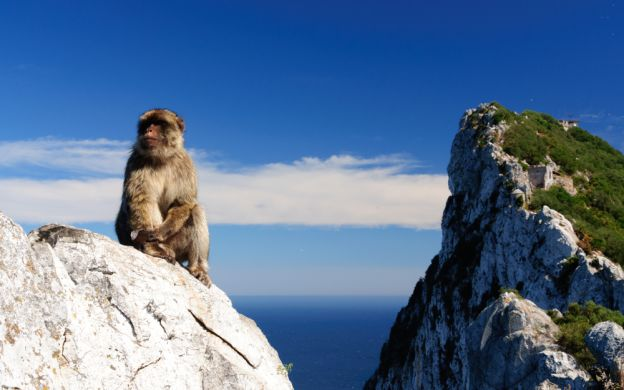 Gibraltar: The Rock Tour and Dolphin Watching Boat Trip - From Costa del Sol