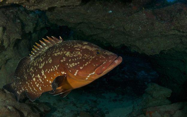 Scuba Diving Adventure in South Fuerteventura