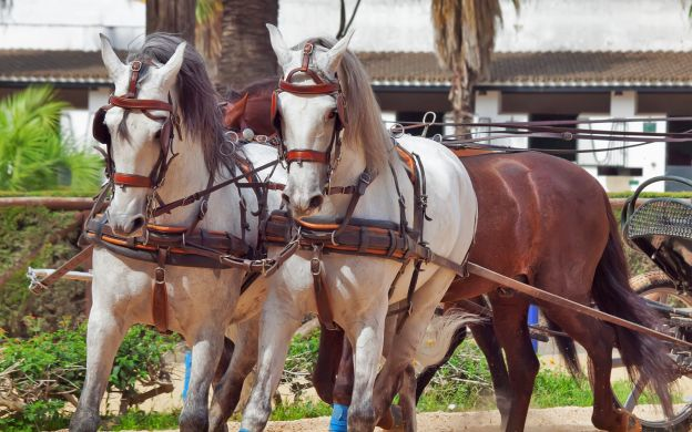 Sherry Tasting and Equestrian Show – Jerez and Cadiz Tour
