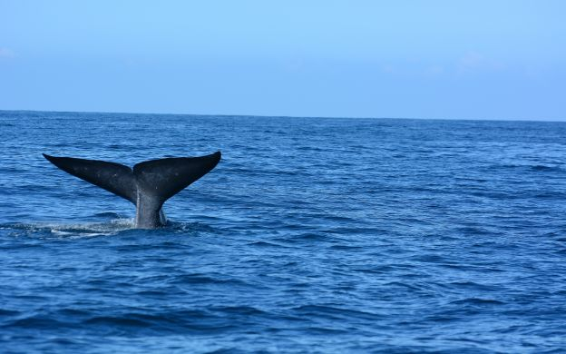 Whale Watching and Snorkeling in Tenerife