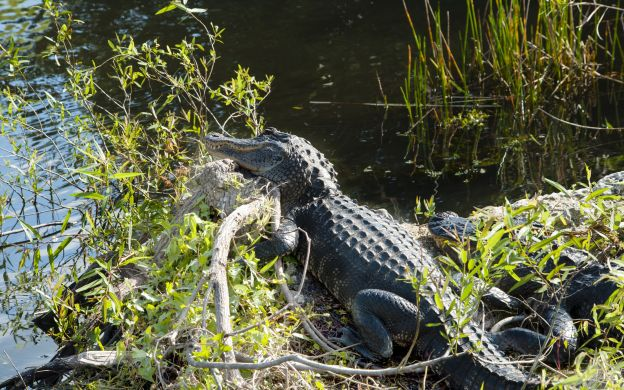 Everglades Airboat Adventure and Biscayne Bay Boat Tour