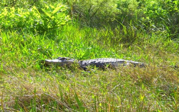 Everglades Airboat Safari and Miami Sightseeing – from Orlando