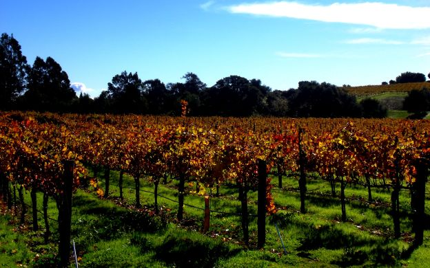 Luxury, Customizable California Wine Country Tour - from San Francisco