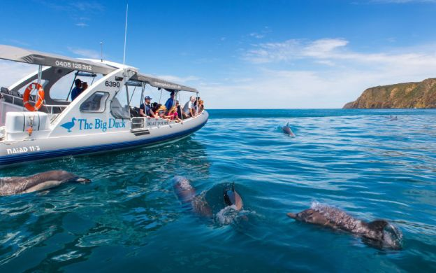 Victor Harbor Tour with Seal Island Cruise