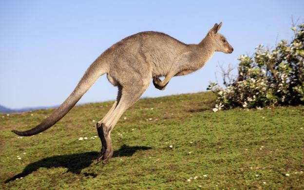 2 Day Kangaroo Island Coast to Coast Tour