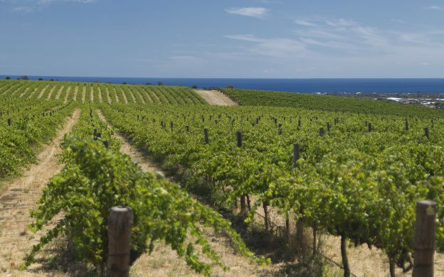 Wine and Dine at McLaren Vale - From Adelaide