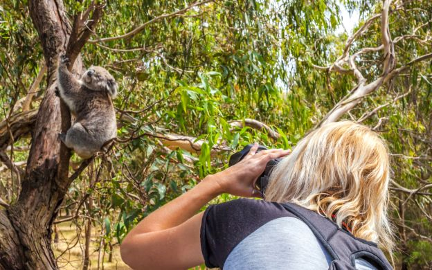Lone Pine Sanctuary, Mt Coot-tha and Brisbane Afternoon Tour