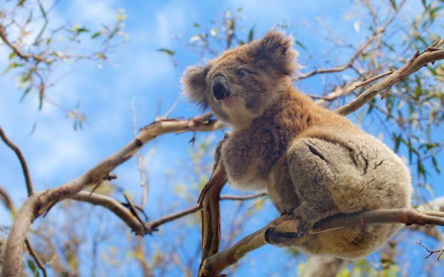 Australian Wildlife Tour: Bonorong Wildlife Conservation Centre, Tasmanian Devils, Richmond