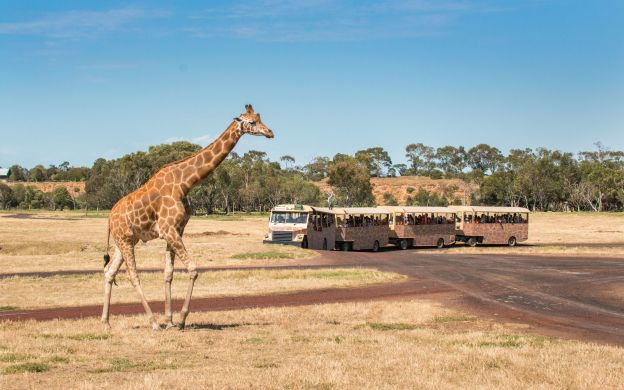 Werribee Open Range Zoo Admission Ticket