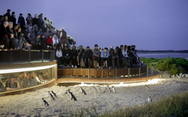 Phillip Island 3 Park Pass with Ultimate Penguin Tour