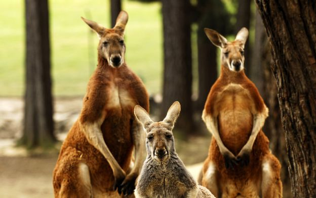 Ballarat from Melbourne: Wildlife Park & Sovereign Hill with Hotel Pick-Up
