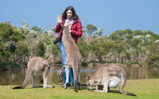 Koalas & Kangaroos In The Wild: Sanctuary Visit, Guide, Picnic Lunch - Small Group