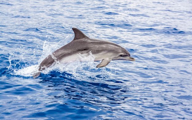Dolphins & Seals Spotting Cruise and Optional Snorkeling - From Sorrento