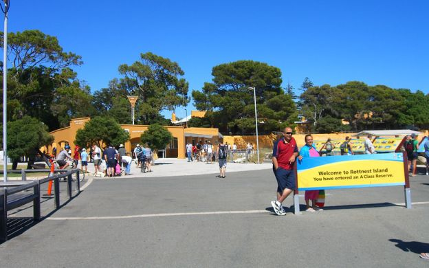Rottnest Island Tour with Ferry and Coach Transfers