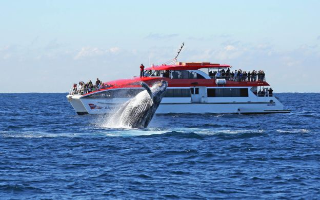 Sydney Whale Watching Cruise with Tea & Coffee