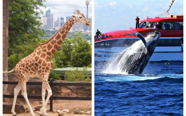 Taronga Zoo Admission & Sydney Whale-Watching Cruise