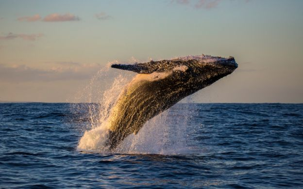 Sydney Harbour Whale Watching Cruise – Listen to the Whales!