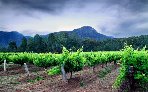 Hunter Valley from Sydney: Customize Tour, Winery Visit with Tastings, Lunch - Small Group