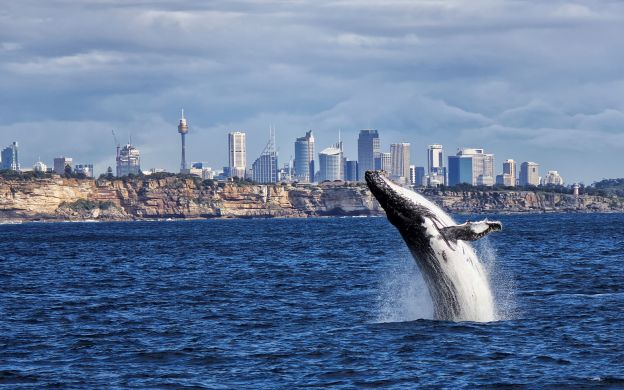 Breakfast with the Whales, Sydney