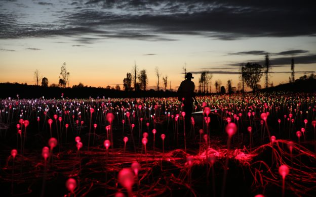 Field of Light Tour with Optional Uluru Sunset, Exclusive Viewing Area and Guide