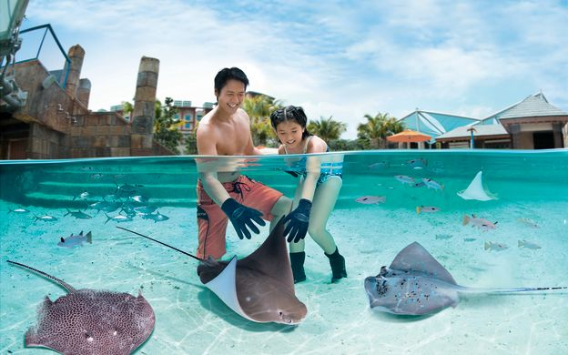 Adventure Cove Waterpark Day Pass with optional Hotel Pick Up
