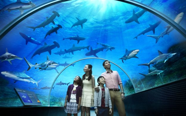 S.E.A. Aquarium™ Day Pass with Hotel Pick up