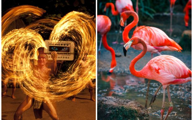 Saver Combo: Singapore Night Safari & Jurong Bird Park with Tram Ride