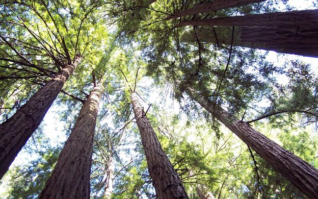California Redwoods and San Francisco Hop-On, Hop-Off City Tour