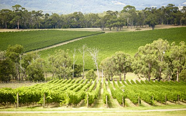Saver Combo: Yarra Valley Wine and Chocolate Tour with Lunch and Eureka Skydeck & Edge Experience