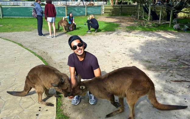 Flexi Combo: Phillip Island Penguin Parade & Yarra Valley Food & Wine Tour