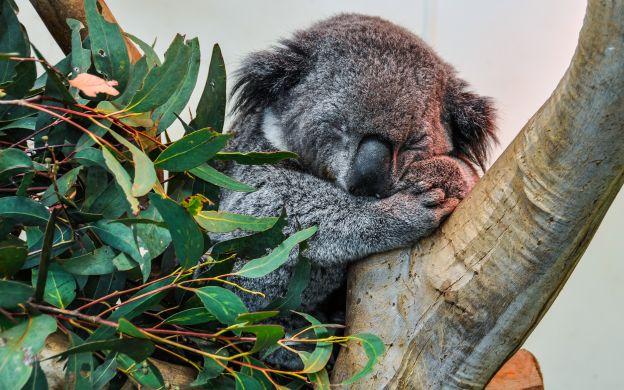 Australian Wildlife Ecotour