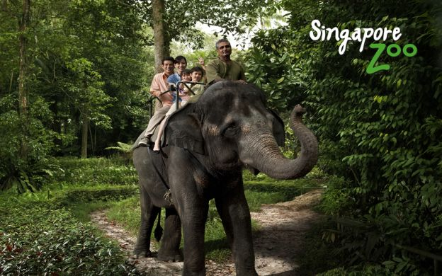 Singapore Zoo With Return Shuttle Transfers