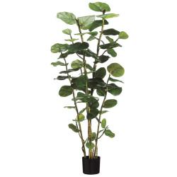 Grape Plant 5'