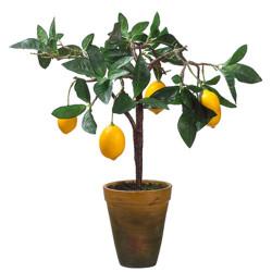 """Lemon Tree In Decorative Pot 21"""""""