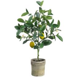 "Lemon Tree in Pot 25"""